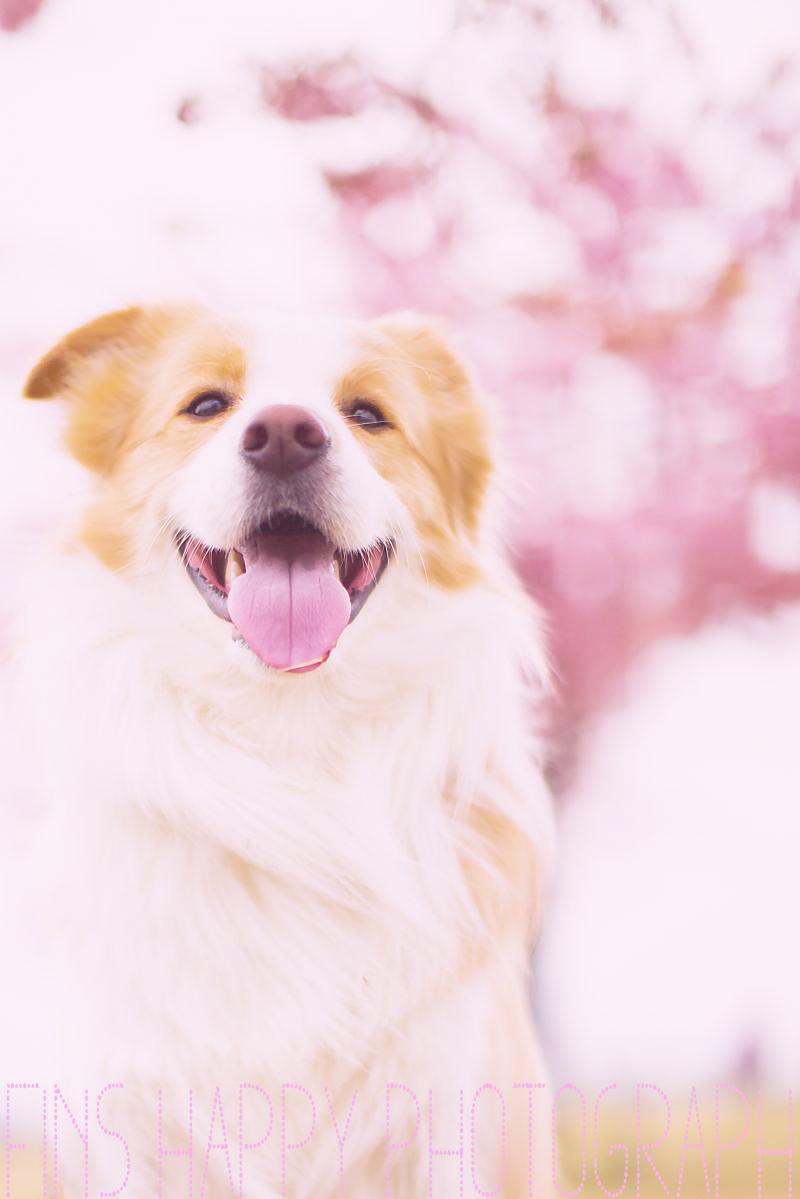 桜色のひかり