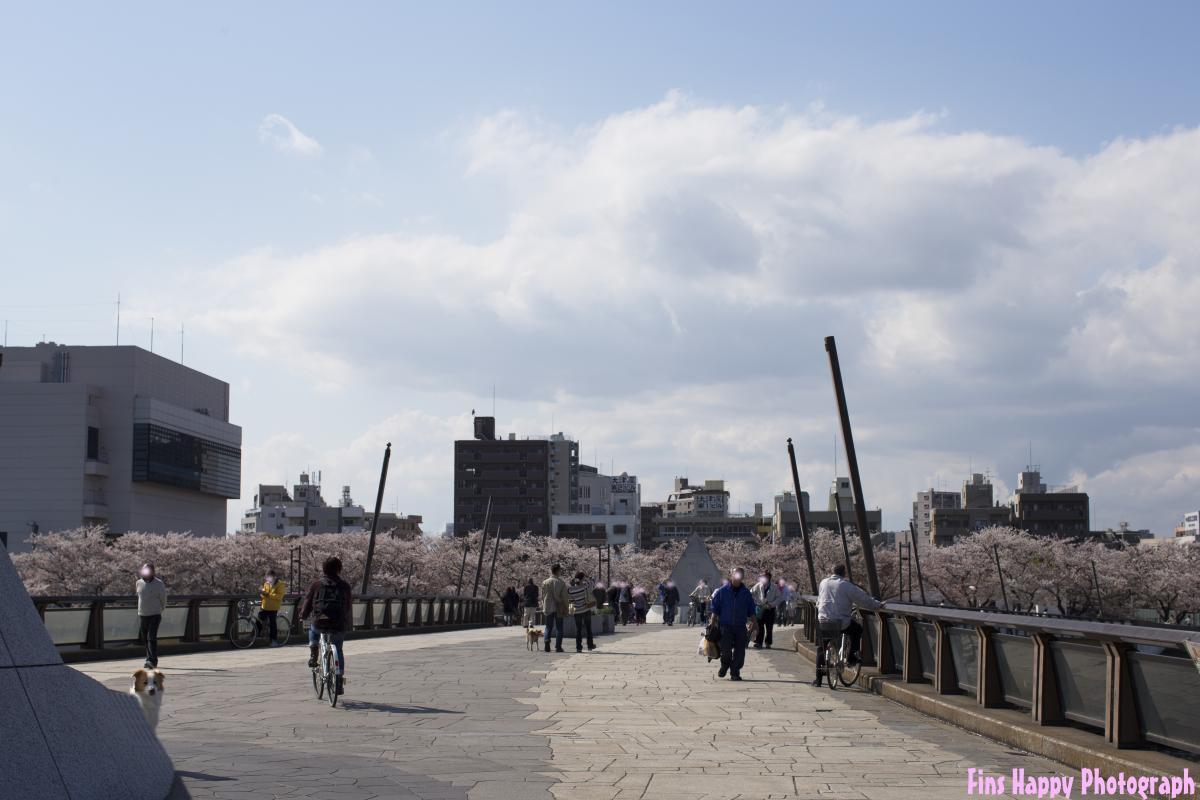 隅田川公園 桜橋