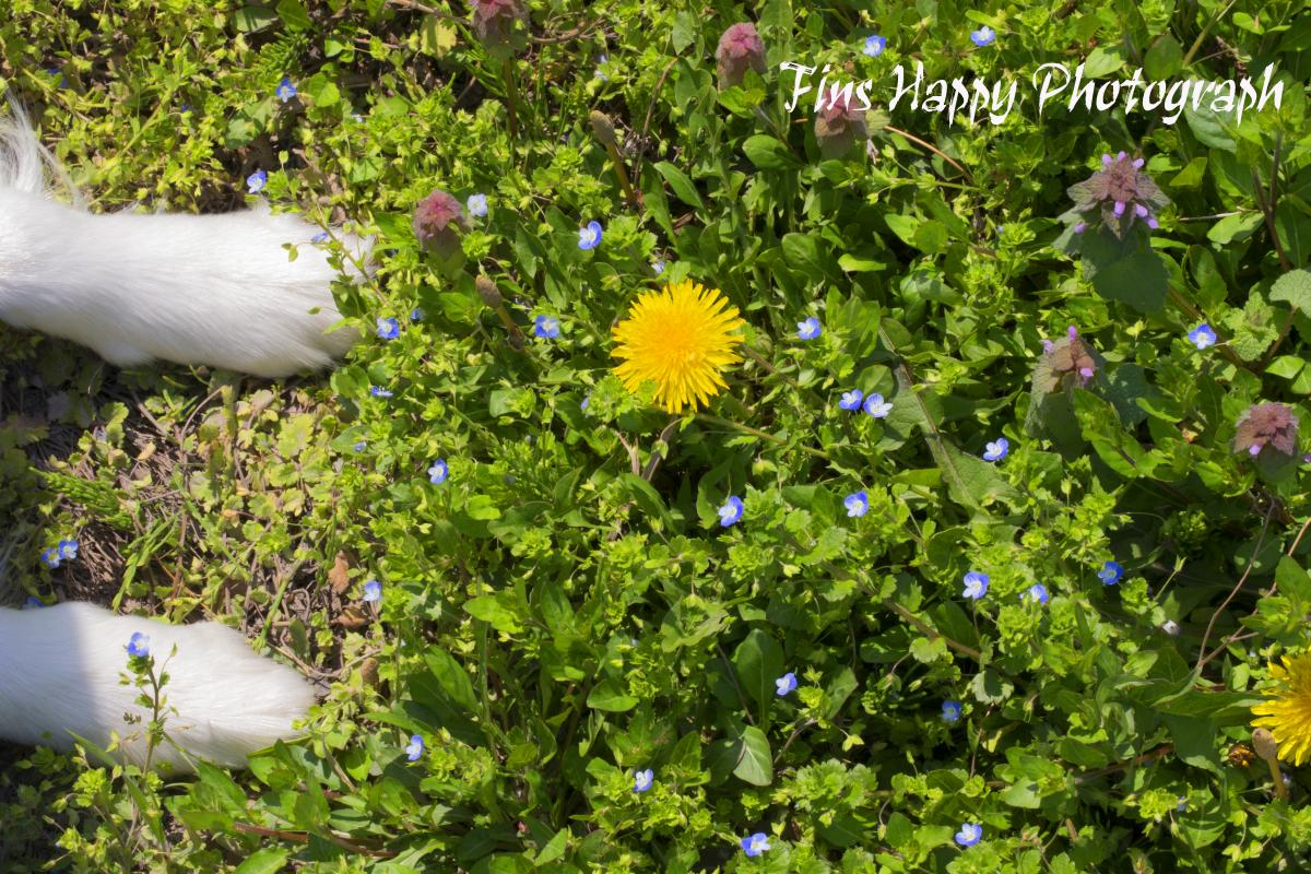 春・野花の競演