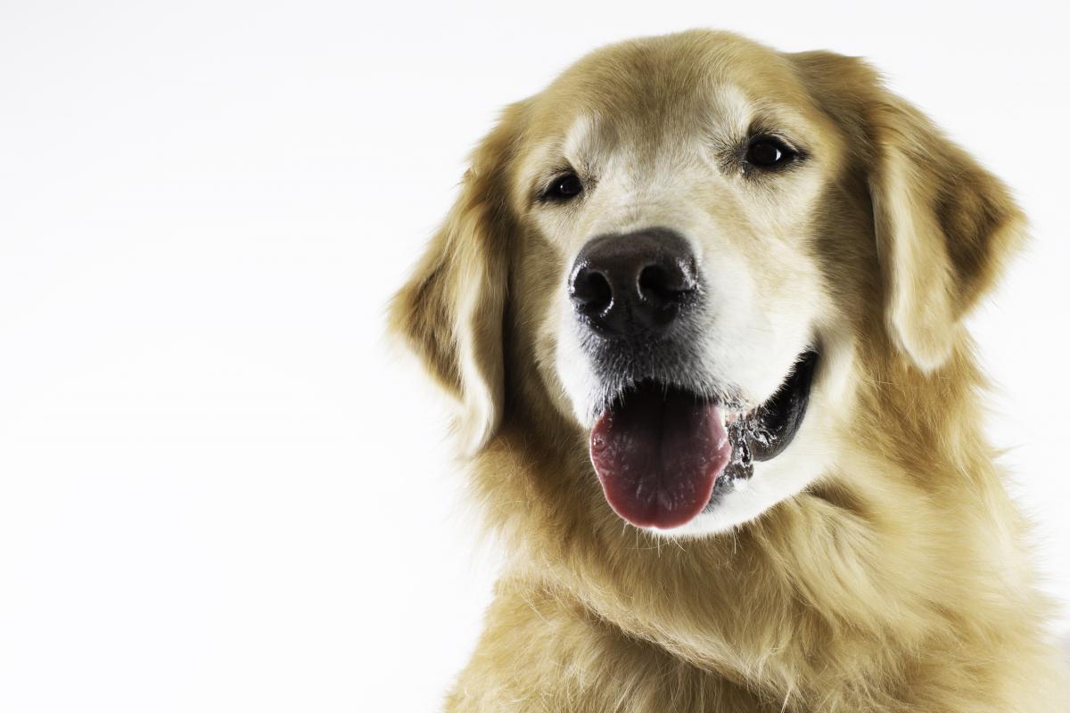 震災保護犬のメイちゃん