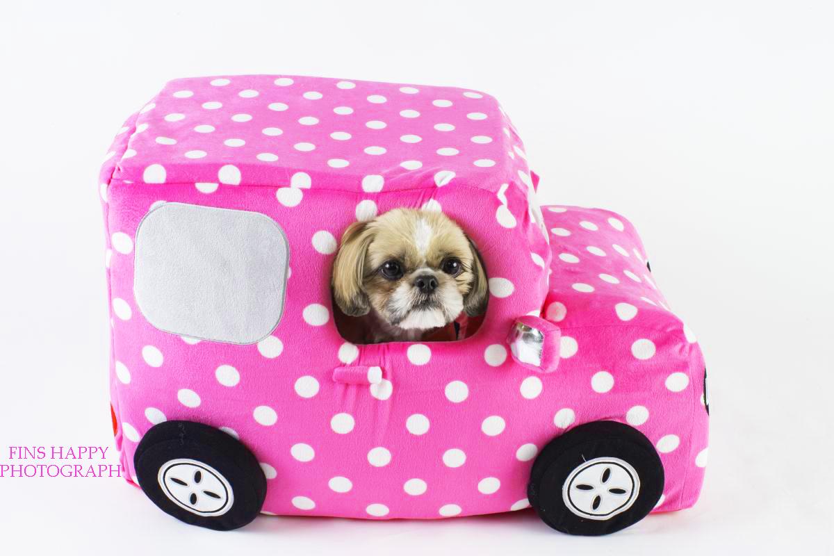 シーちゃんのMY CAR