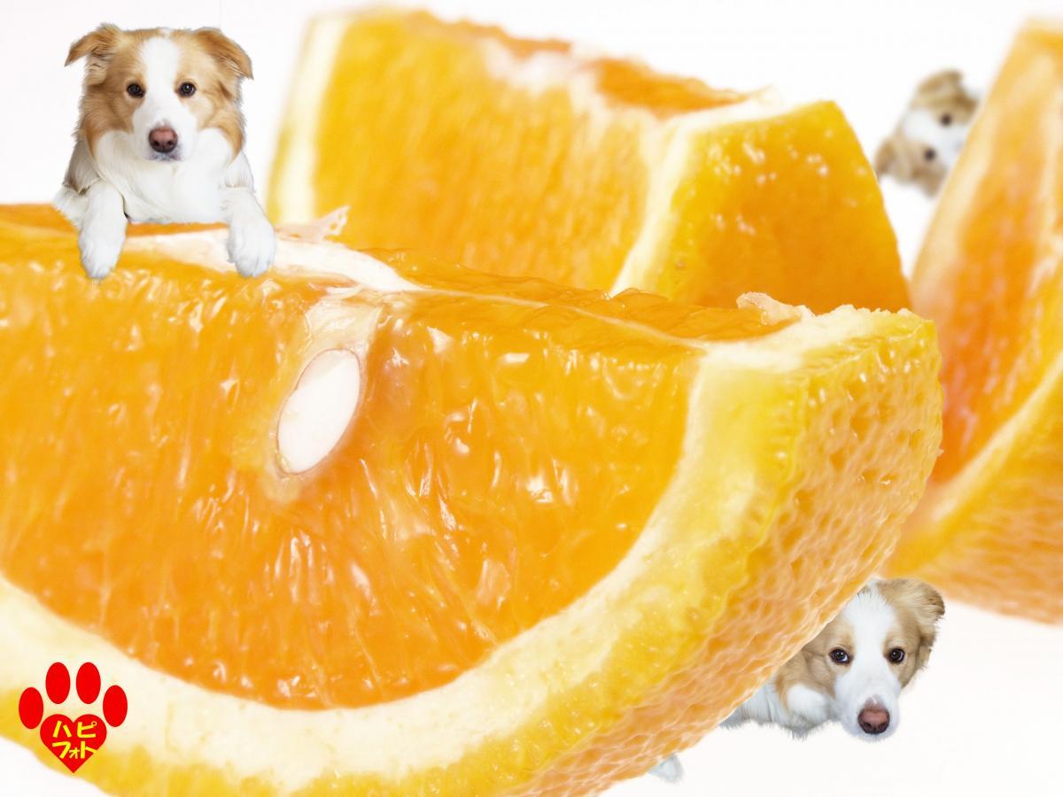 リクエストにお応えしてオレンジ系
