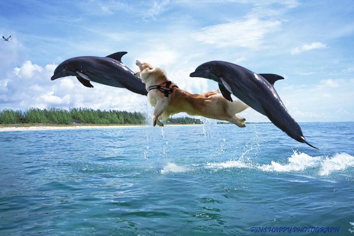 イルカと遊んだ少年