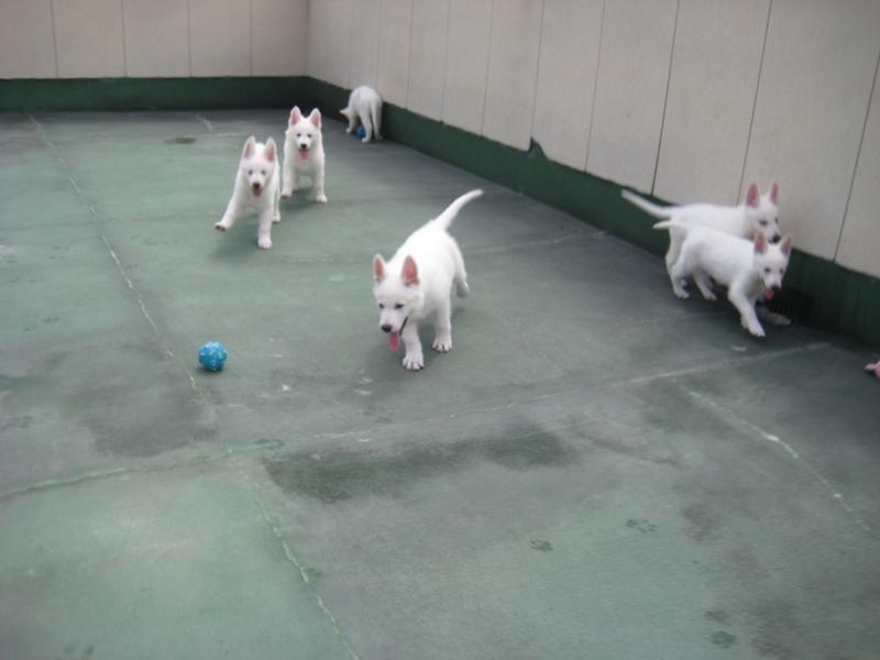 ナビ仔犬9