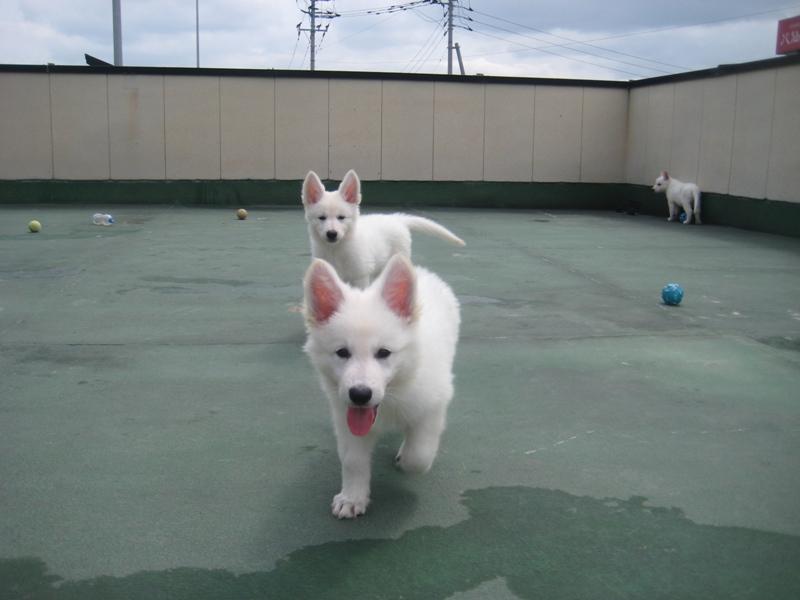 ナビ仔犬10