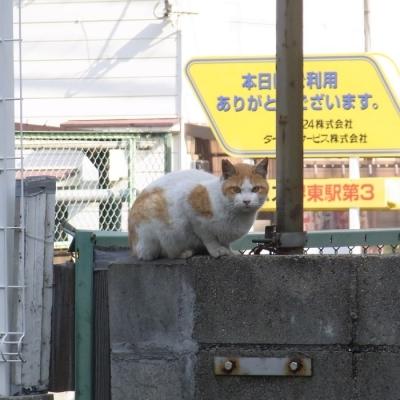 cat_2014_0401.jpg