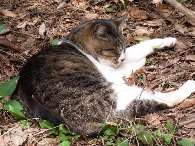 cat_2014_0402.jpg