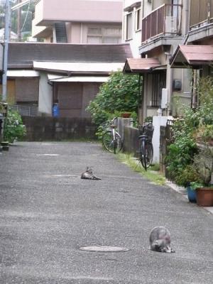 cat_2014_0403.jpg