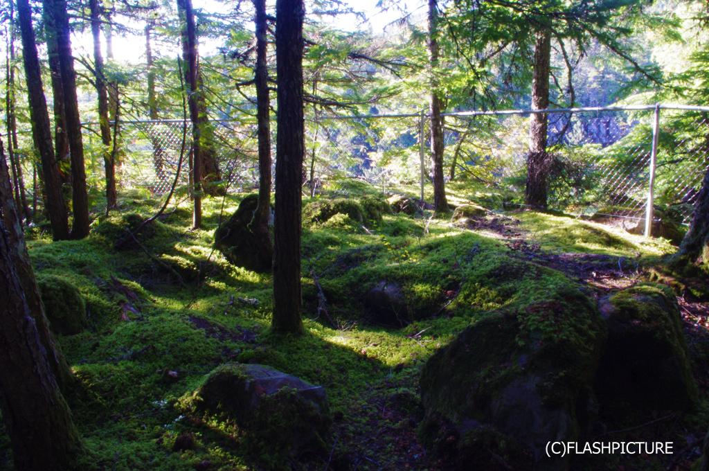 20140321_森の小道