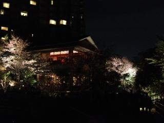 椿山荘ライトアップ