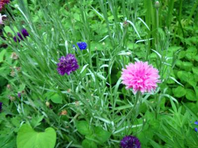 蕎麦屋の庭の花