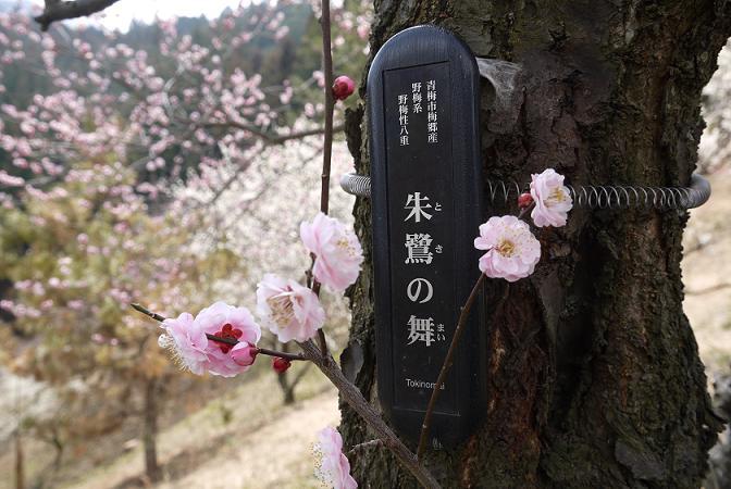 2014_0318戸田別館 0105