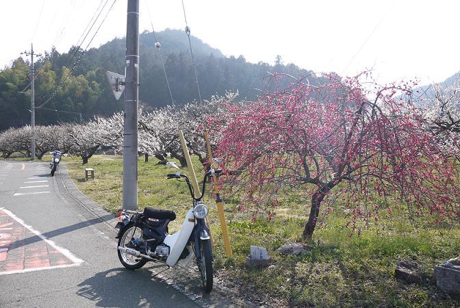 2014_0318戸田別館 0124