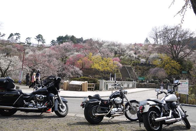 2014_0401戸田別館 0008