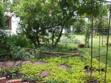 石化柳の足元に作った花壇