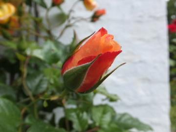 ムーンライト花
