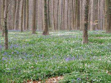 ベルギーの森