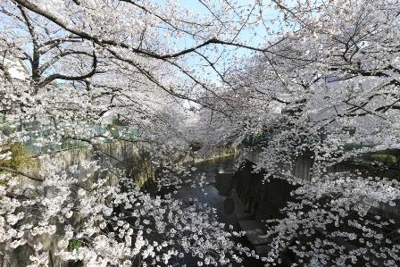 石神井川1