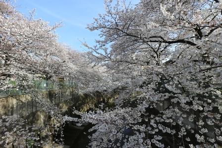 石神井川2