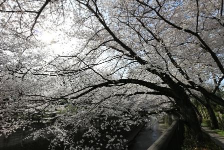 石神井川3
