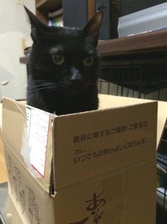 箱猫写真 1