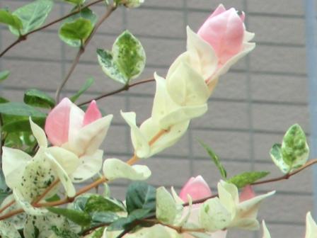 何かの花1