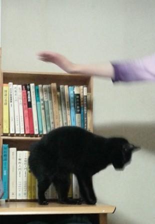 jump4.jpg