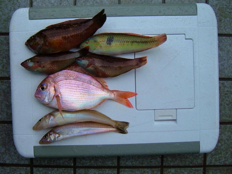 m-瀬戸内の小魚