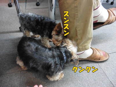 匂い嗅ぐ犬