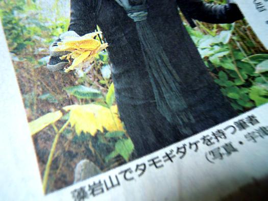 2014年9月1日の道新夕刊に掲載された、有名人が藻岩山でタモギダケ(タモギタケ)を持っている写真。