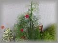 可愛い花1