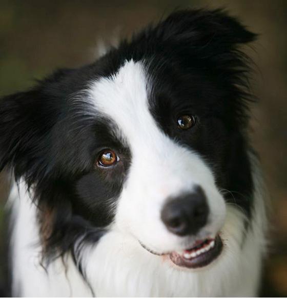 ju1-探偵犬