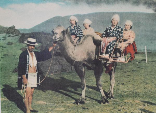 昭和6年 ゴビ砂漠から三原山観光に駱駝が導入されました。  以下 藤井工房提供