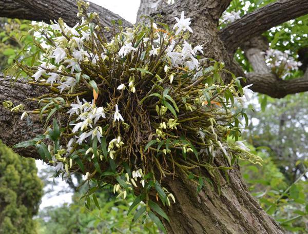 ここまでが伊豆大島椿花ガーデンでした