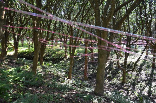 ヤブ椿の林です(椿の森公園)