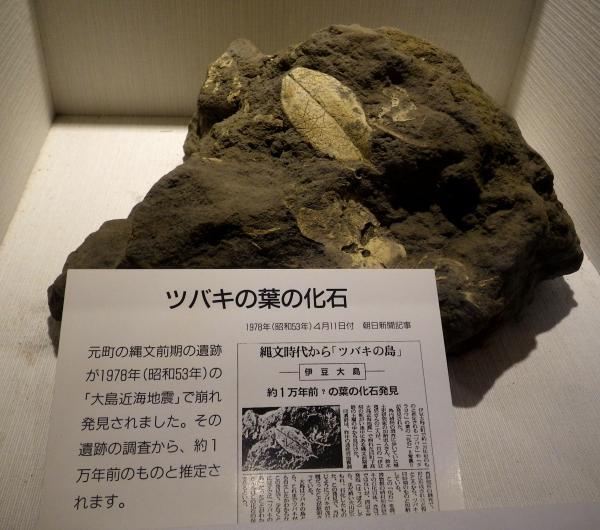 大島には8000年前から縄文人が住んでいましたが椿の歴史はもっと古いです