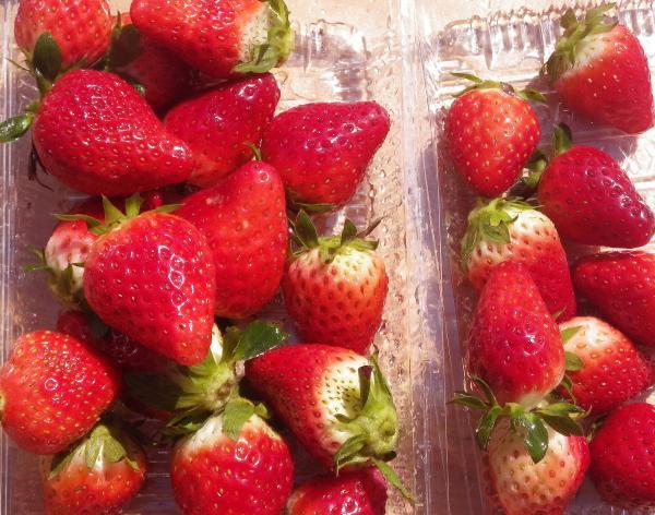 藤田農園の苺