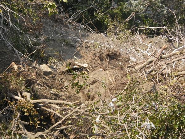 中低木の樹海とはいえ迷い込んだら危険です
