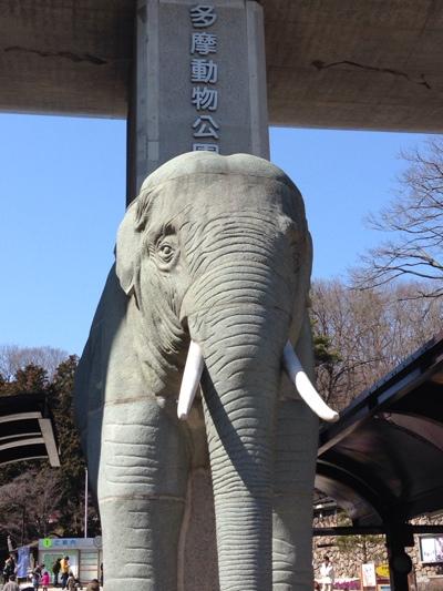 多摩動物公園だゾウ。