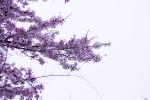 DSC02219_20140413141139bae.jpg