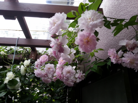 201405191432123f9.png