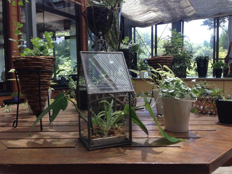 2014観葉植物1