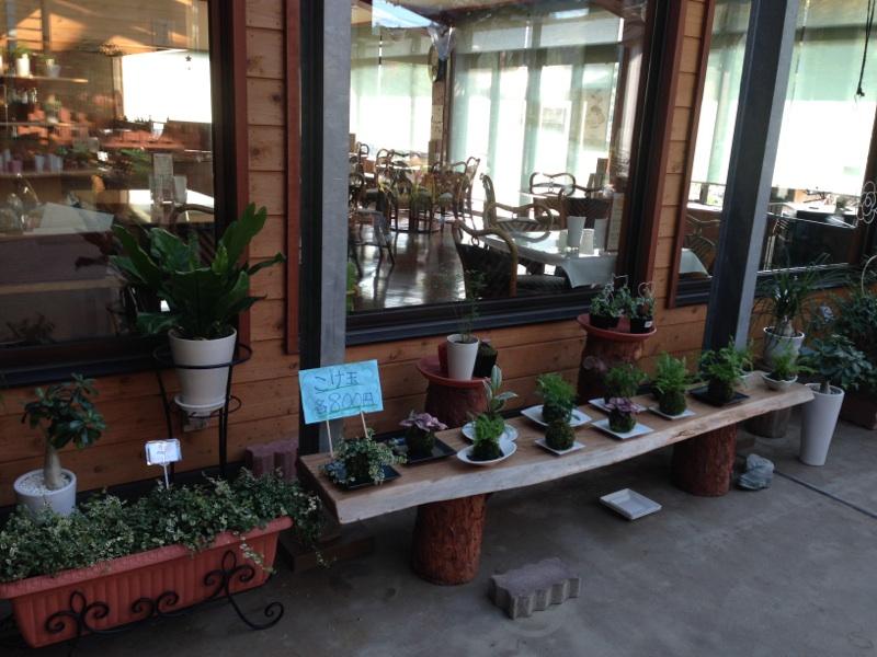 2014観葉植物4