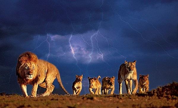 growaround_lion1.jpg
