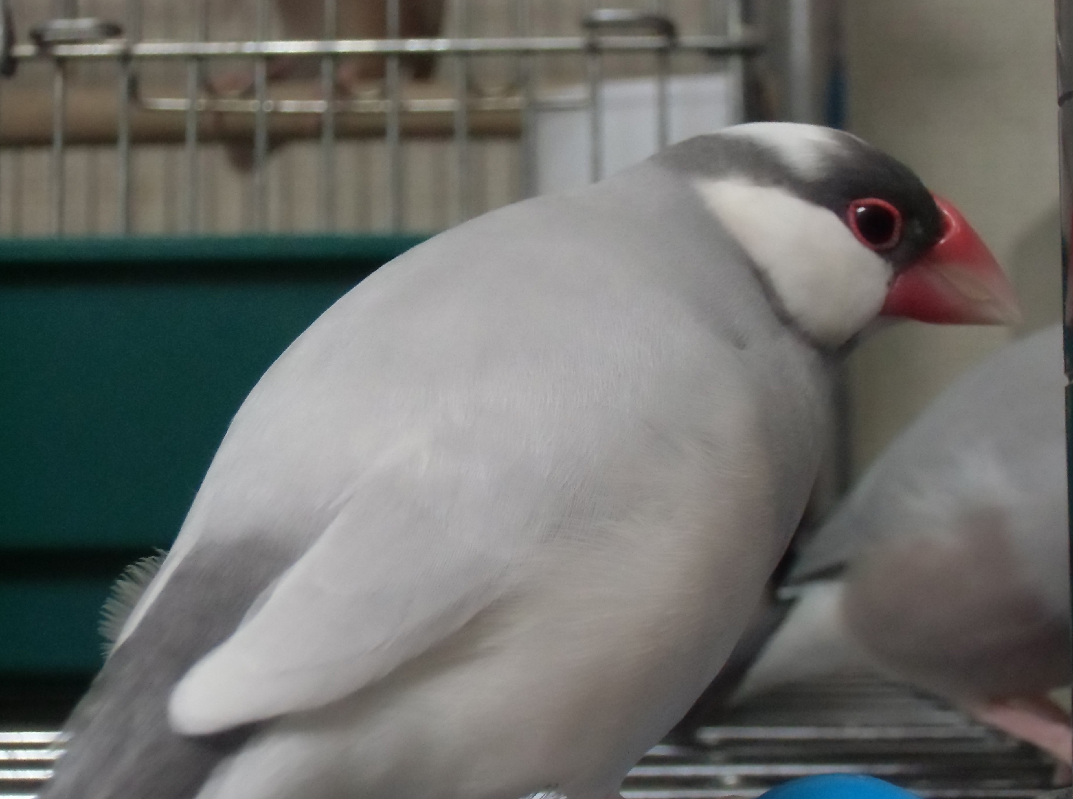 鳥さんってすごい