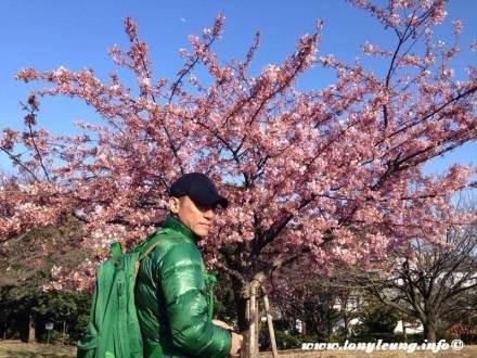 トニーさん@桜の下
