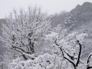 雪景色 L