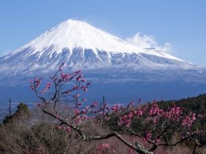 富士山と梅 B