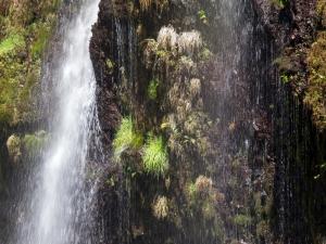 白糸の滝 G