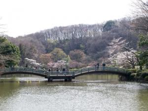 薬師池公園の桜 B